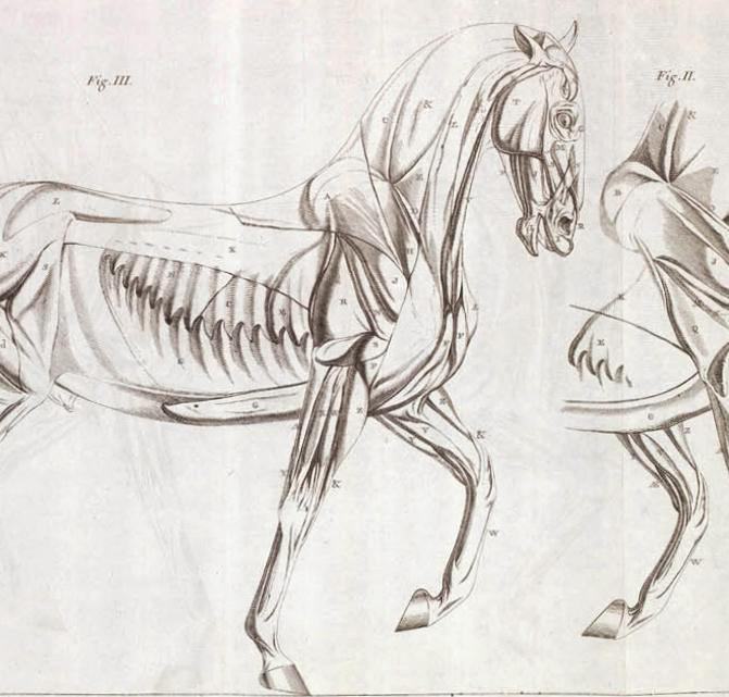 Pferde Ausschnitt
